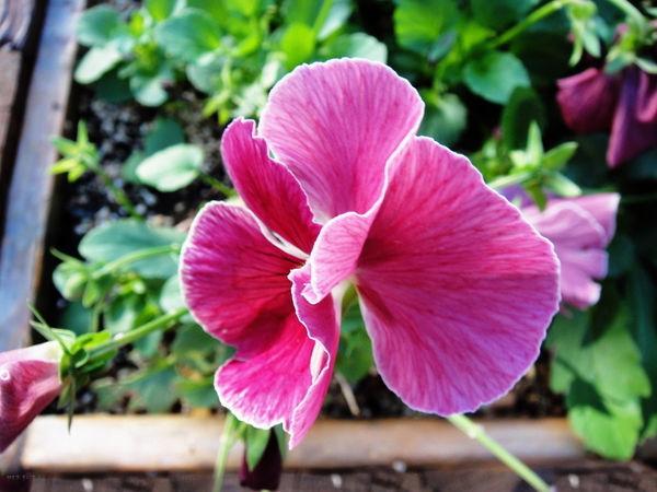 PS如何虚化模糊人物和植物背景?